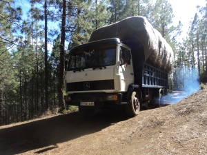 Collecting pine needles is a lucrative business and some argue that it provides fire prevention as well. Pine needles are used for the beds of cattle and compost on farms. This truck is hauling off pine needles.